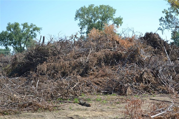 Bellevue Tree Dump at Cedar Island Road will be Open to the Public on Saturday, July 29th from 8am until Noon